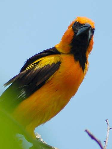 Birds Of Mexico And Great Bird Photos