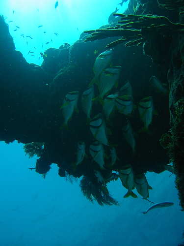 maroma resort dive