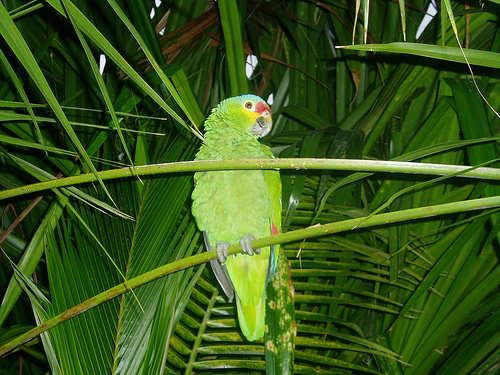maroma resort parrot